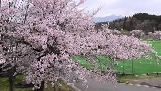 明桜高校の春~MEIOH IN SPRING~